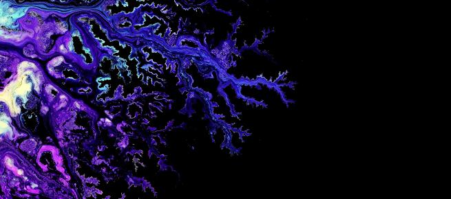 purple tree.png